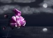 Night Orchid