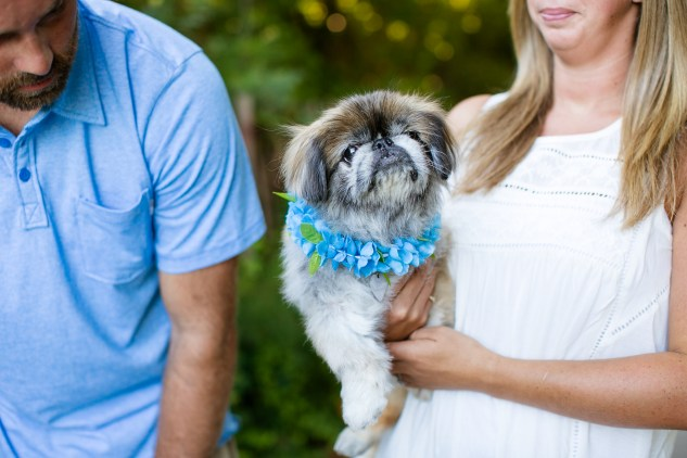 virginia-beach-engagement-with-dogs-7