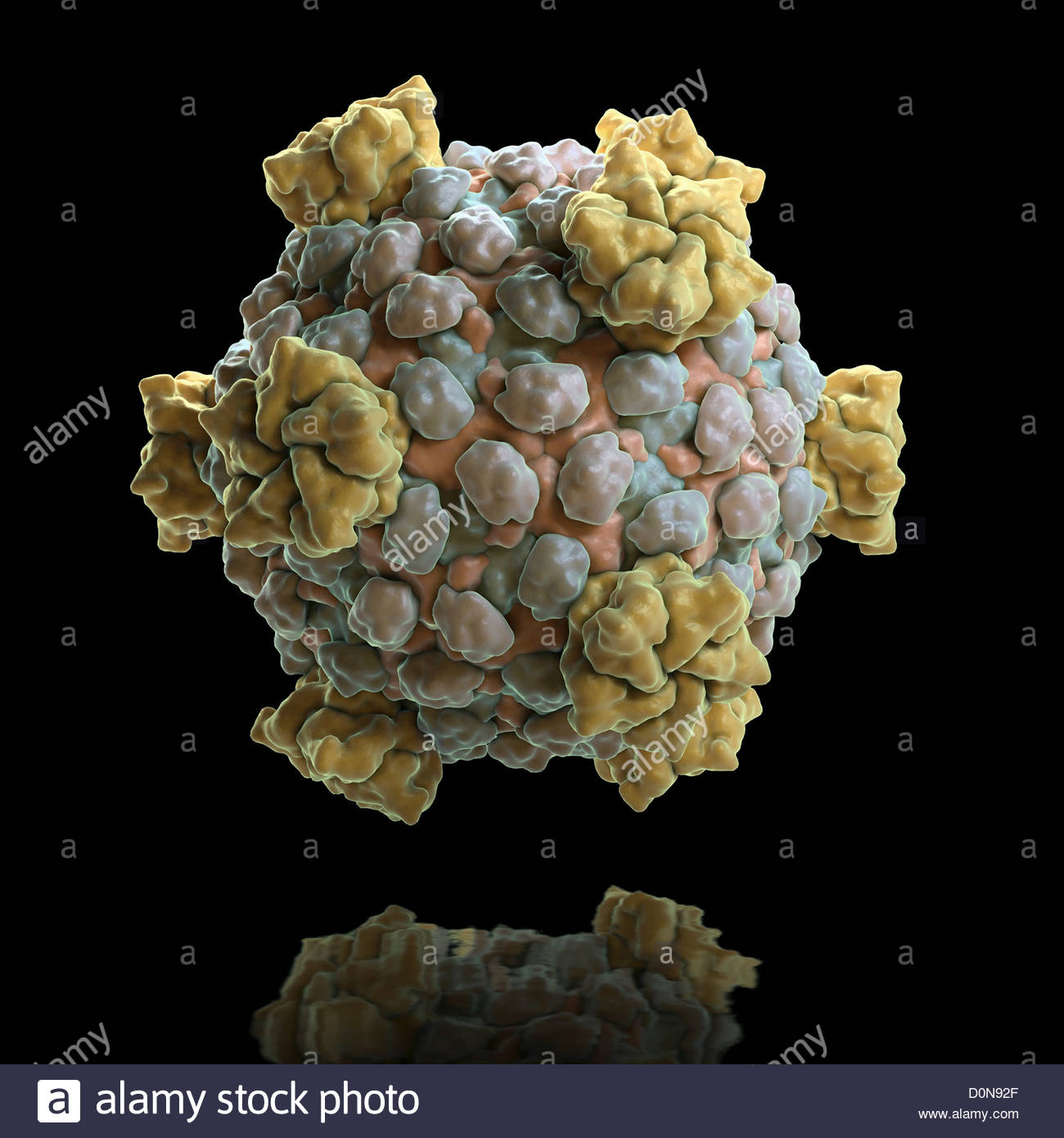 Infectious component of celiac disease?