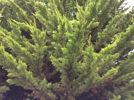 Warm Winter Green
