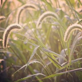 amanda-kay-photo-010