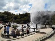 Lady Knox geyser at Wai-O-Tapu park