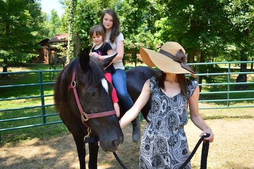 A horse at Fair Hills Farm!