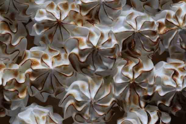 marshmallow meringue pumpkin cheesecake