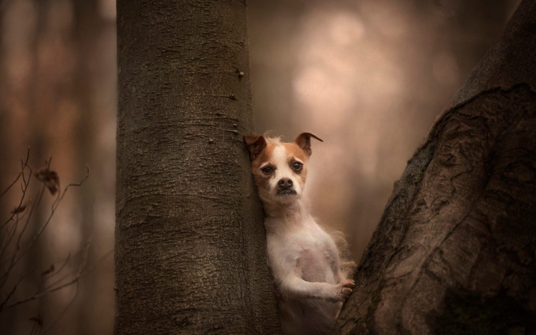 Photographing Naughty Dogs