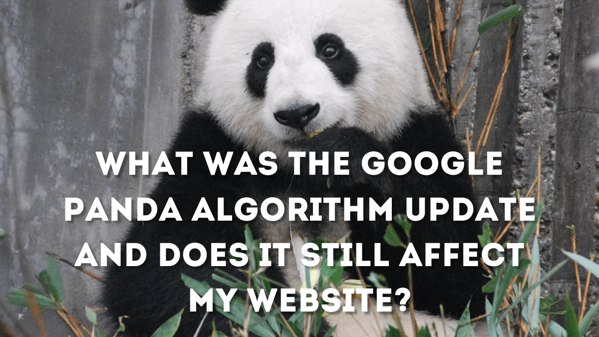 What was the Google Panda algorithm update and does it still affect my website?