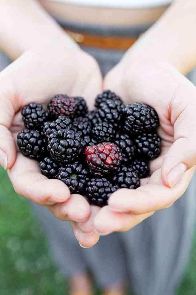 backberries