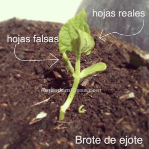 Siembra en semilleros