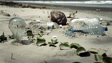 Photo of Jóvenes UAQ deben exigir agenda ambiental a políticos: ONU