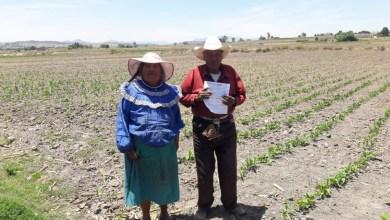 Photo of Programa Bienestar apoya a más de 14 mil productores locales