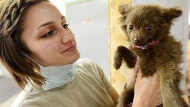 Photo of SSQ realizará jornada de vacunación antirrábica canina y felina en septiembre
