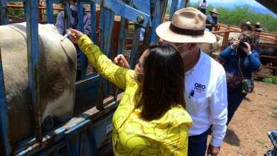 Photo of Arranca programa Veterinario en «Tu Potrero en Tolimán»