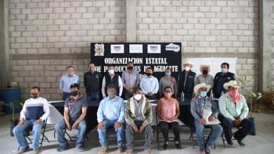 Photo of Constituyen Asociación de Productores de Aguacate de Querétaro A.C
