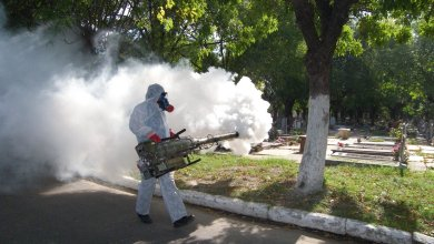 Photo of Dengue causa problemas en la Sierra de Querétaro