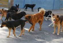 Photo of Se realizará Jornada Nacional de Vacunación Antirrábica Canina y Felina 2020