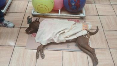 Photo of Más de 30 esterilizaciones en 5ta. Campaña de Bienestar Animal