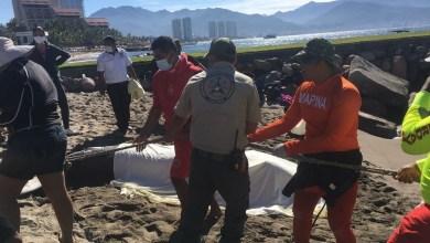 Photo of Encuentran a dos ballenas muertas en Puerto Vallarta