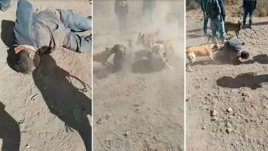 Photo of Perros atacaron a supuesto ladrón en La Valla
