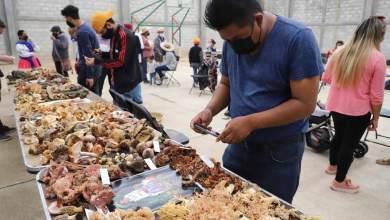 Photo of UAQ celebra la cultura del Hongo, con tradicional Feria en Amealco
