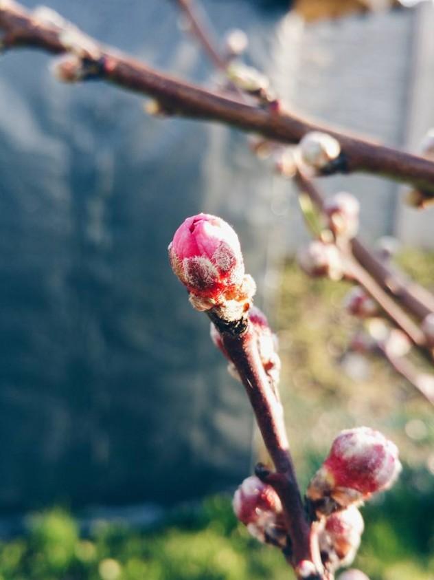 martie in gradina