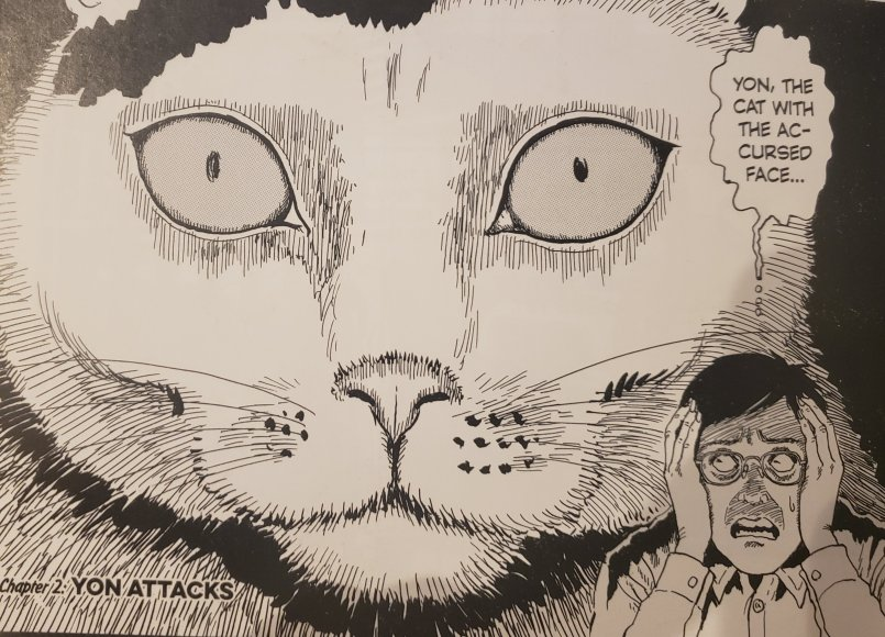 pannel from junji ito's cat diary