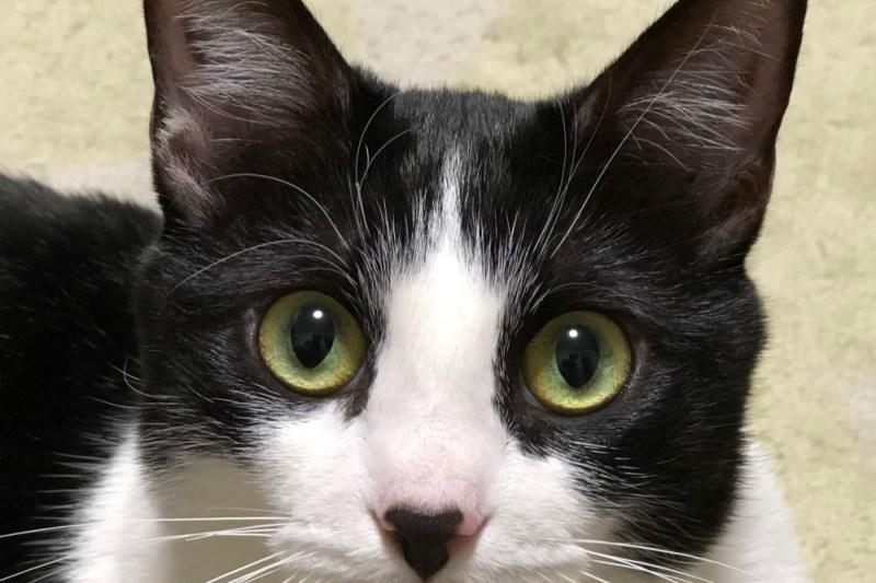 豪徳寺 招き猫?