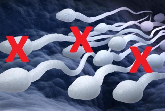 spermatozoïdes morts