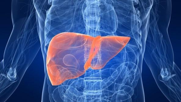 Comment le jatropha rouge pourrait soigner l'hépatite B ?