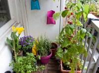 balcony gardening | This Amsterdam Life