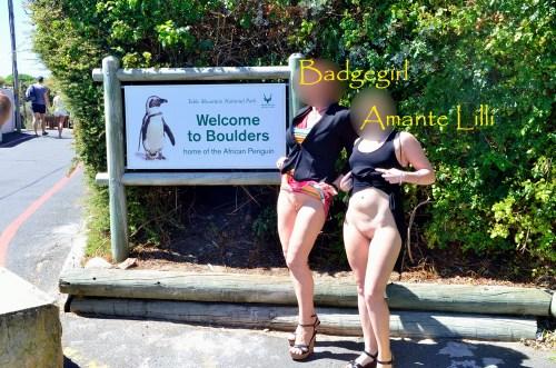 Exhib à Boulder Beach, en Afrique du Sud, la plage des Pingouins !