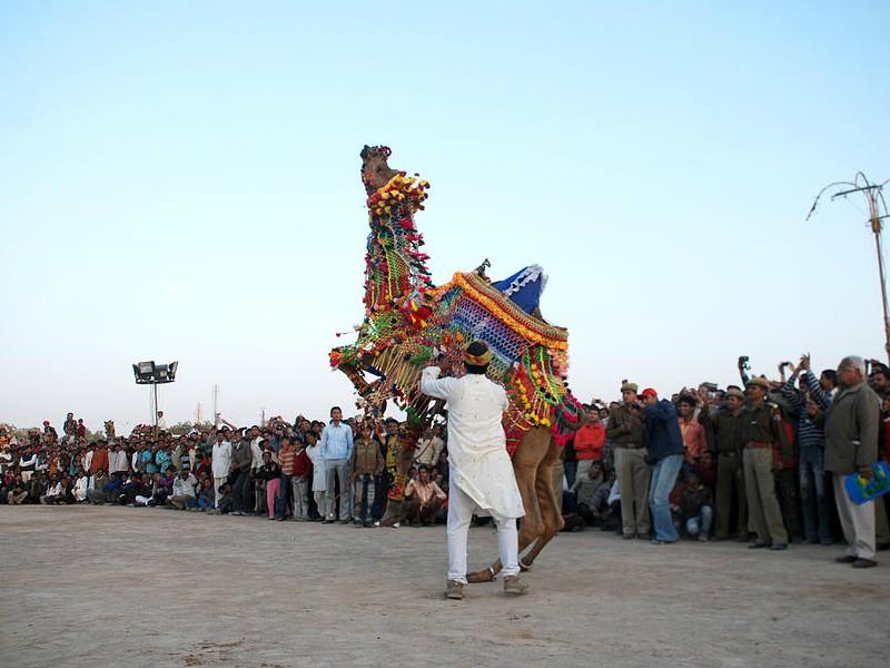 Festival Bikaner Camel na região do Rajastão na India