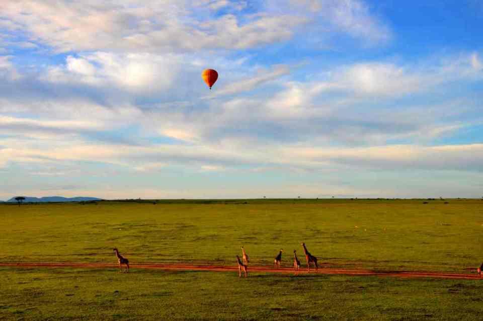 Safari no Masai Mara