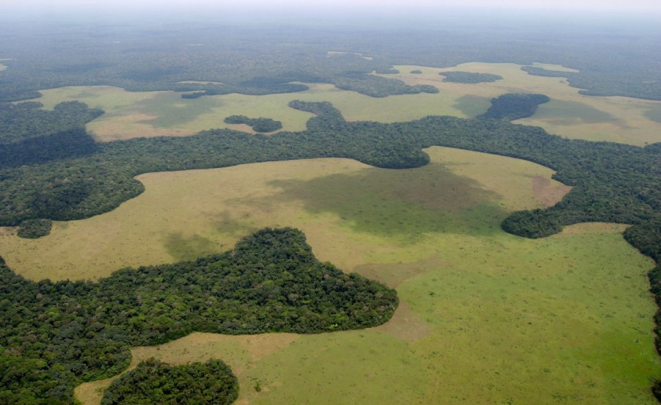 Floresta tropical nos Camarões