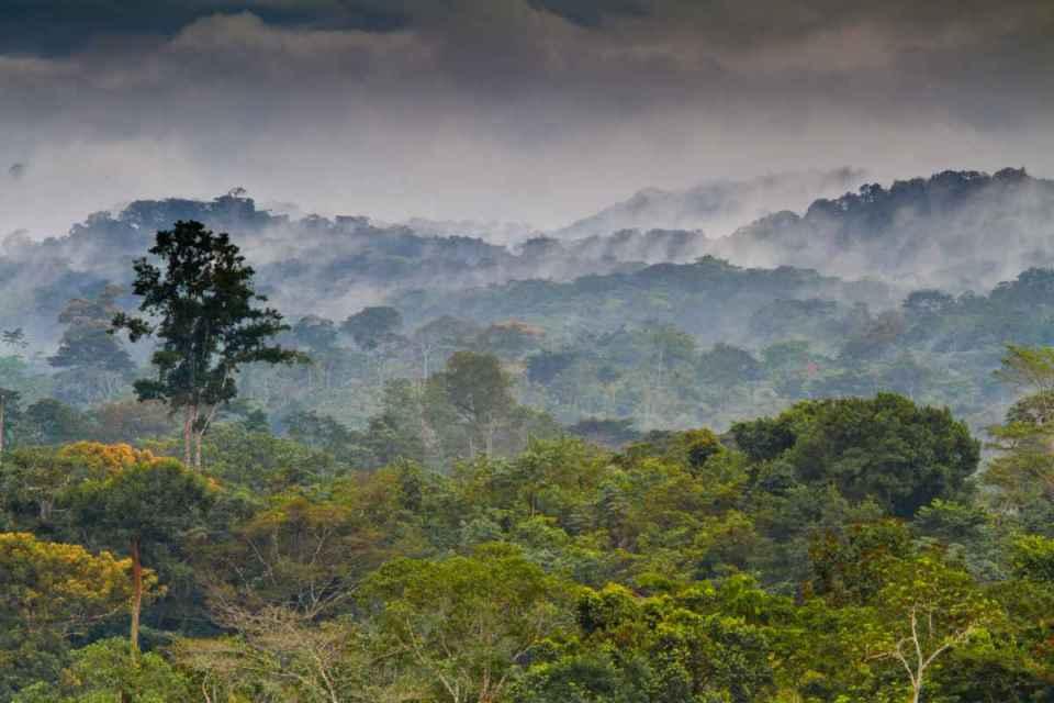 Floresta da Guiné Equatorial