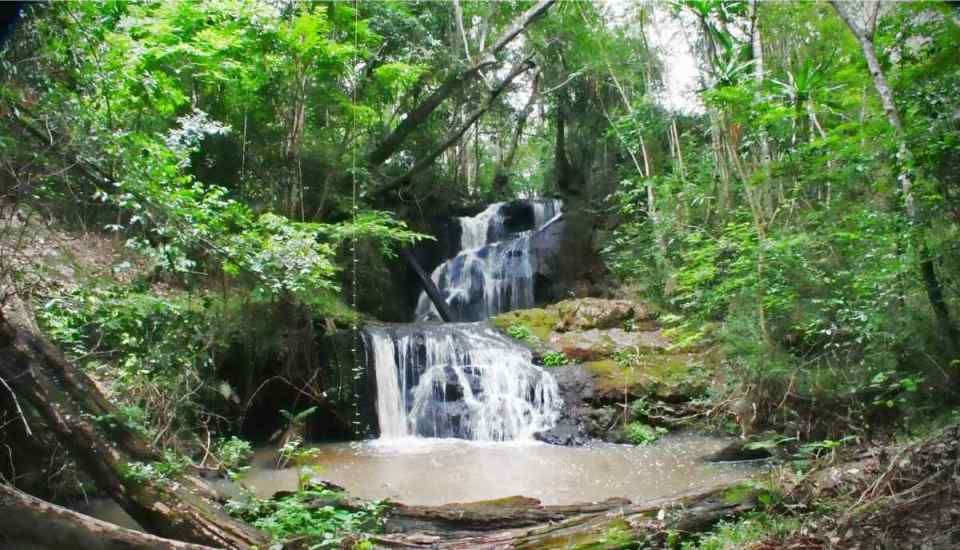 Floresta na República Centro-Africana