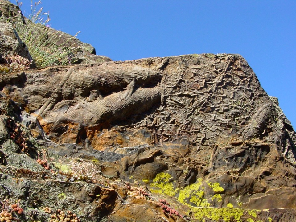 Fósseis em Penha Garcia