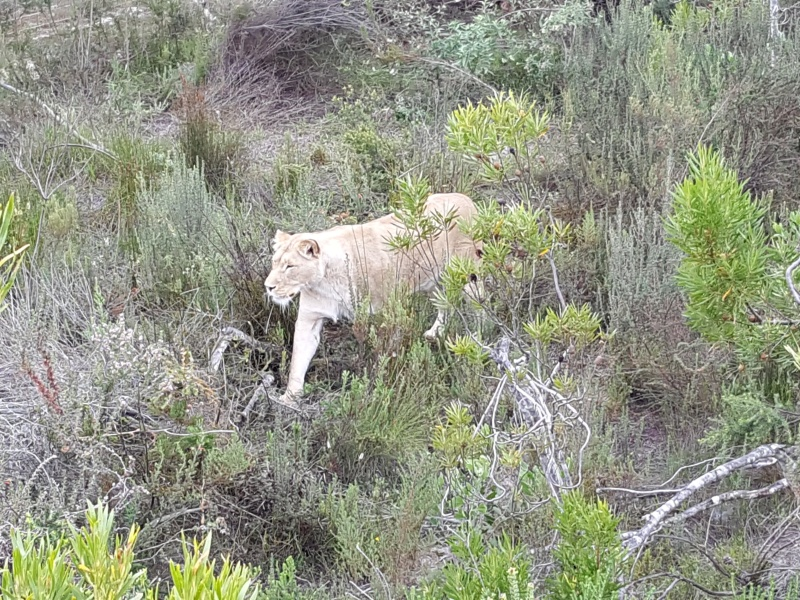 5 passeios pela Africa do Sul