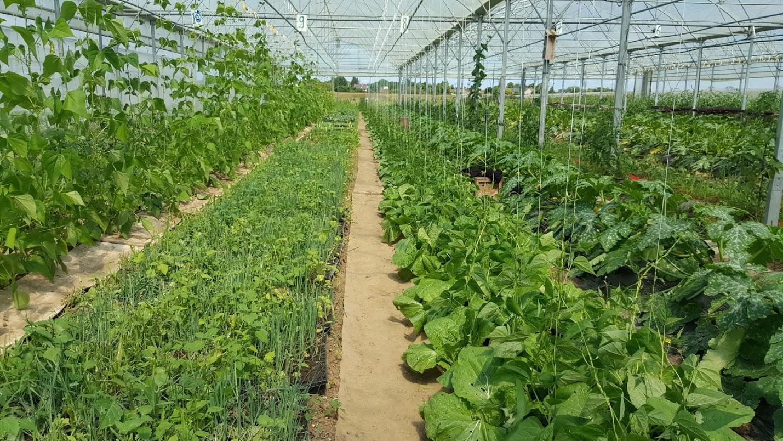 jardin 6 juillet