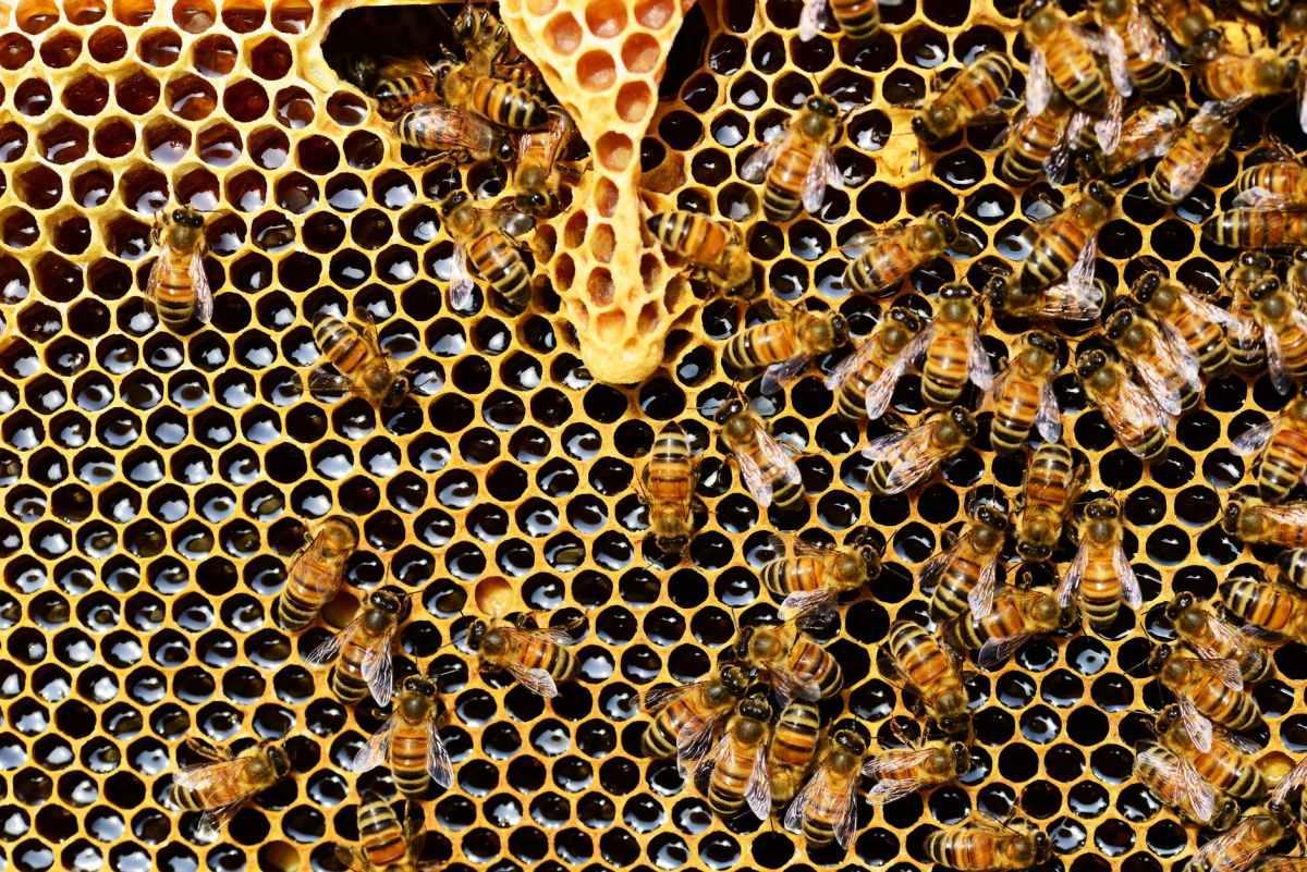 honeycomb close up detail honey bee