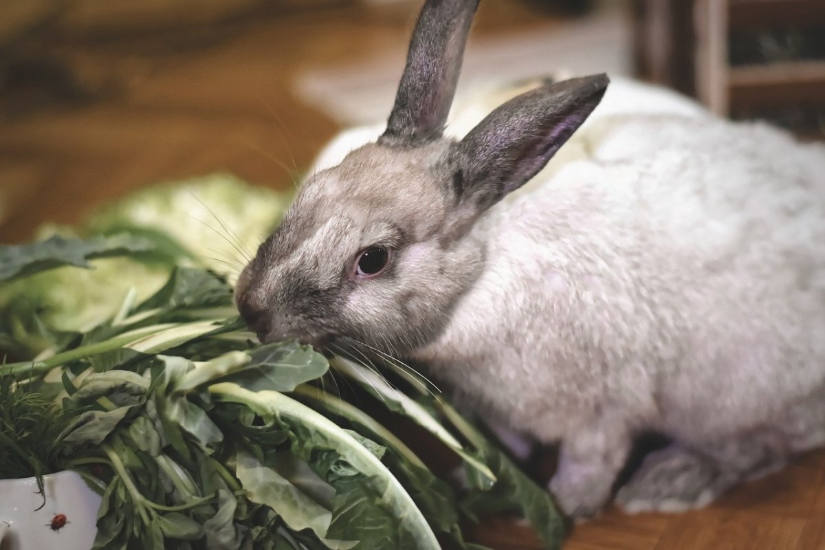 Raising Meat Rabbits