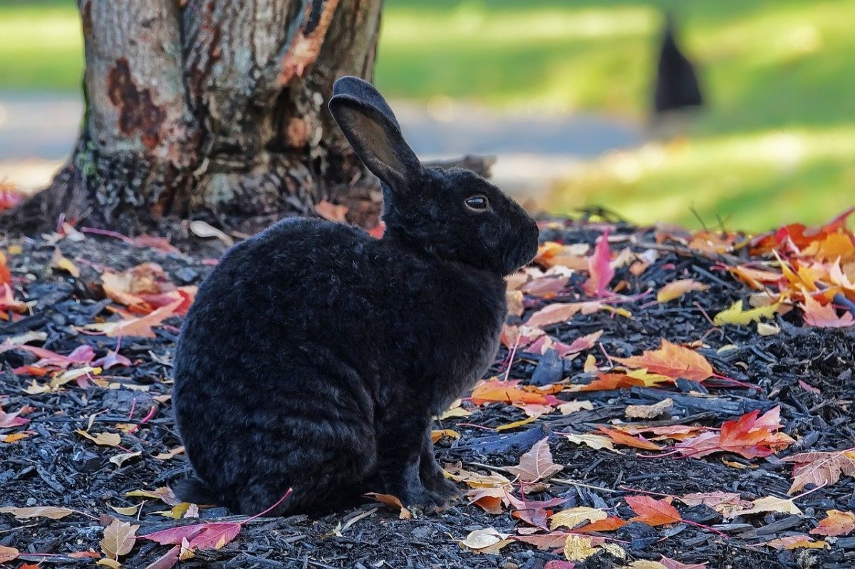 Choosing the Right Breed of Rabbits