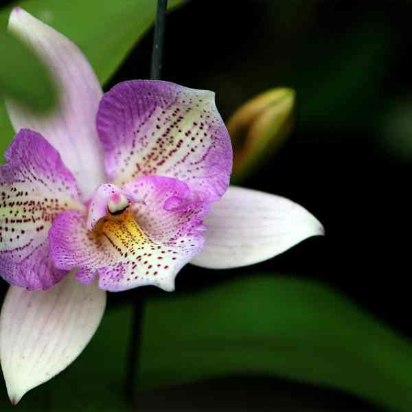 How Do You Prune Orchid Plants?