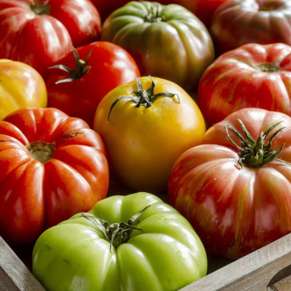 Growing Heirloom Tomatoes in Southern Climates