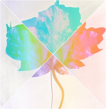 leaf collage1
