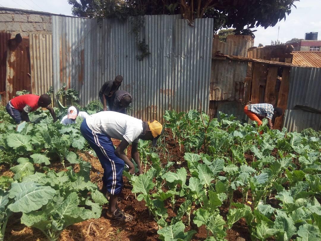 Agricultural vocational training at Agape Hope Children Centre