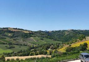 マルケ州ワイナリー『Sartarelli/サルタレッリ』へ