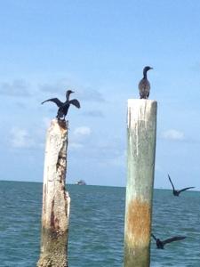 Sea birds by Stiltsville