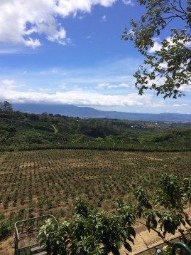 Costa Rican coffee farm