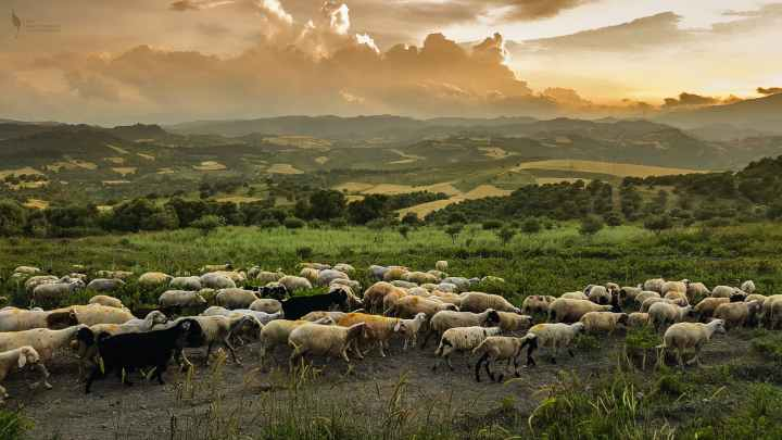Follow your dreams. Don't be a sheep in the herd.