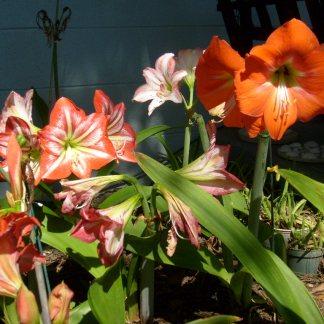 Flower Garden May 2010